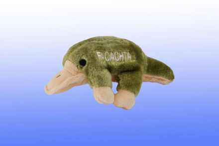 Picture of #915 Facachta The Platypus